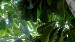 Birdie Lurdy