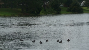 """The """"duck pond"""" that is our regular haunt."""