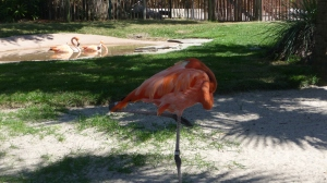 Yogi Flamingo