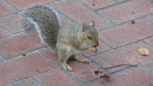 This is NOT Nuts, or he would look like he was sitting on a pillow.